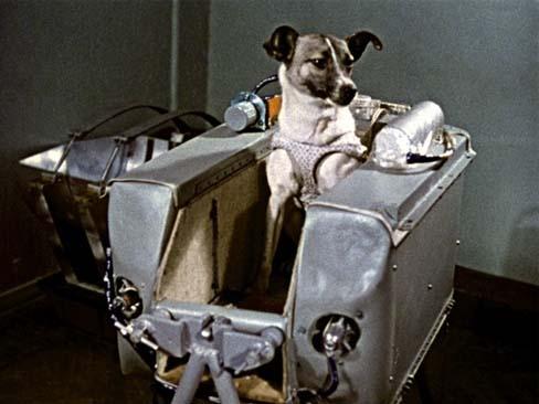 Laika perro del espacio