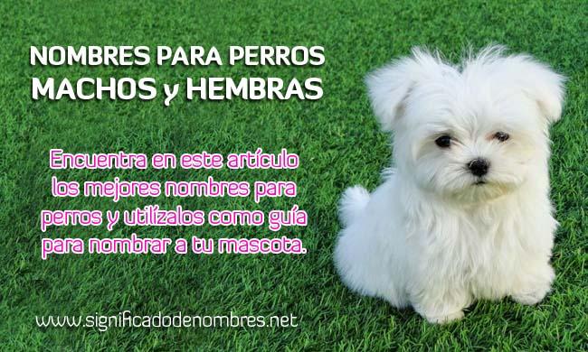 Nombres de Perros Machos y Perritas Hembras