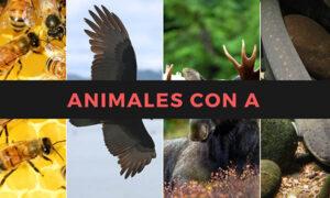 Nombres de animales con la letra A