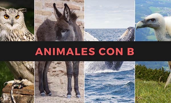 Nombres de animales con la letra B