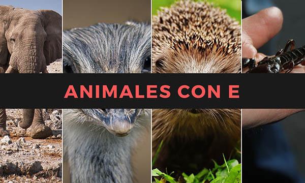 Nombres de animales con la letra E