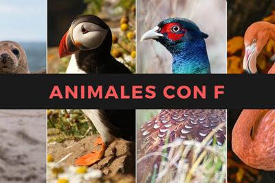 Nombres de animales con la letra F